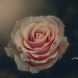 The lonely rose by Rita Di Lalla