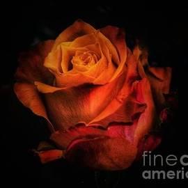 Mystery rose by Rita Di Lalla