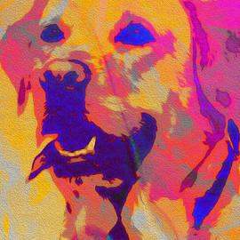 Labrador by B B Pokie