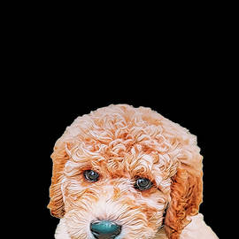 Labradoodle Puppy by Donna Watson-Hall and ArtcrewNZ