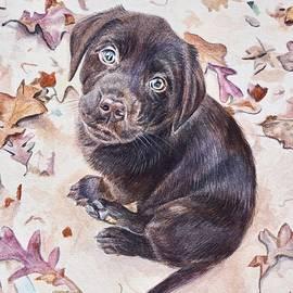 Labrador Retriever Puppy by Gail Dolphin