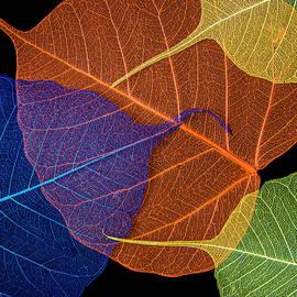 Lace pattern by Larisa Fedotova