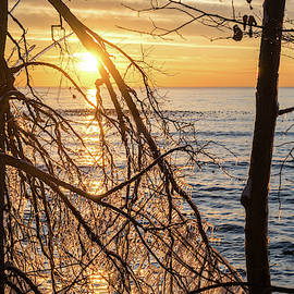 Lacy Ice Screen - Sunrise Sub-Framed with a Filigree of Frozen Branches by Georgia Mizuleva