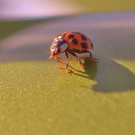 Lady Bug Luck by Christopher James
