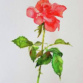 Lady Rose by Yuson Yi