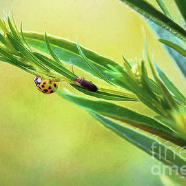 Ladybug And Friend by Sharon McConnell