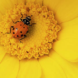 Ladybug Picnic by Cathy Franklin