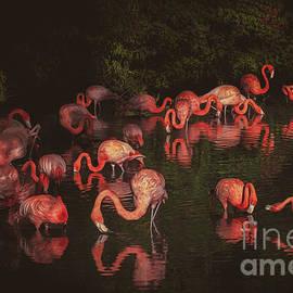 Lagoon of Pink Flamingos in Sarasota, Florida by Liesl Walsh