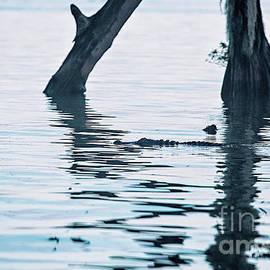 Lake Verret Blue Light Special by Scott Pellegrin