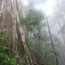 Lamington Rainforest by Maryse Jansen
