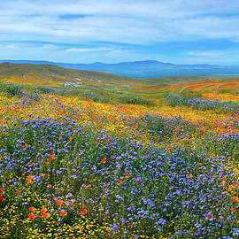 Lancaster Superbloom 2019 Panorama by Lynn Bauer