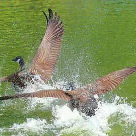 Landing by Atiqur Rahman