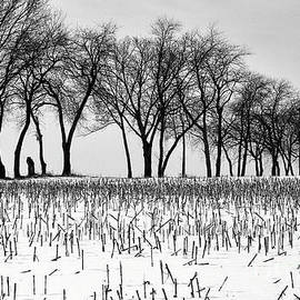 Landscape Winter Trees Black White  by Chuck Kuhn