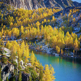 Larches at Perfection Lake by Inge Johnsson