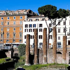 Largo di Torre Argentina, Rome, Italy. by Joe Vella