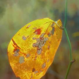 Last Leaf by David Beard