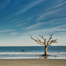 Last Tree Standing by Jurgen Lorenzen