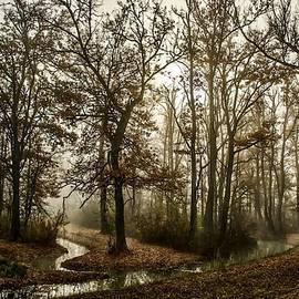 Late Autumn Landscape Scene - Winterton Park L A S by Gert J Rheeders