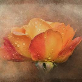 Late Season Rose by Terry Davis