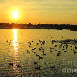 Late Spring Sunset over the Bay by Dora Sofia Caputo Photographic Design and Fine Art