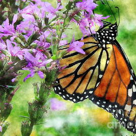 Late Summer Monarch by Tami Quigley