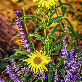 Lavender and Daisies by Janice Pariza