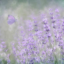 Lavender Bliss by Lori Deiter