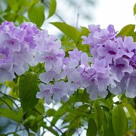 Lavender Fascination by Sonali Gangane
