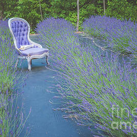 Lavender field 2 by Claudia M Photography