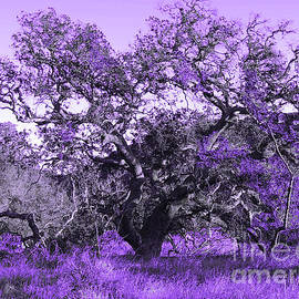 Lavender Oak by Robert Ball