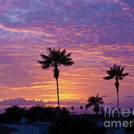 Lavender Sunset by Julieanne Case