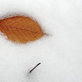 Leaf and Twig in Snow 2 020820 better by Mary Bedy