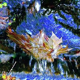 Leaf And Water by Alida M Haslett