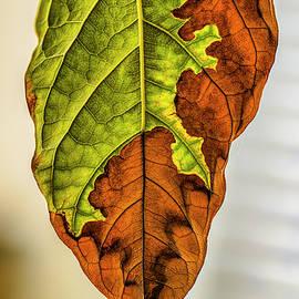 Leaf detail #j7 by Leif Sohlman
