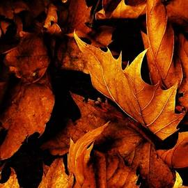 Leaf Flames by Frederick Hahn
