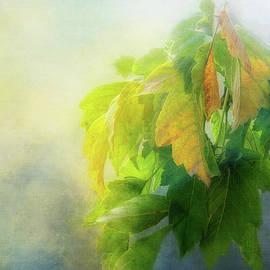Leaf Light Beauty by Terry Davis