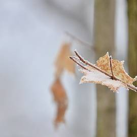 Leaf Of Winter by Greg Hayhoe