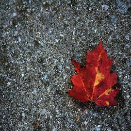 Leaf on Bench by Bill Tincher