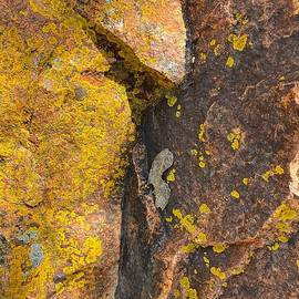 Leaf on Rock by Jerry Abbott
