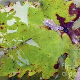 Leaf With Reflection by Kim Tran