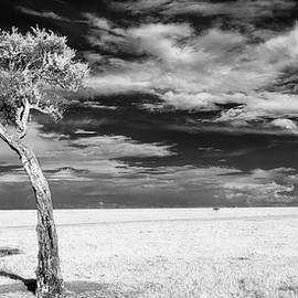 Leaning tree on the plains - infrared by Murray Rudd