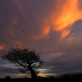 Leaning Tree Sunset. by Bill Lee