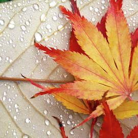 Leaves Aglitter by Debra Orlean