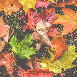Leaves by Alana Ranney