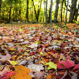 Leaves Are Falling by Alana Ranney