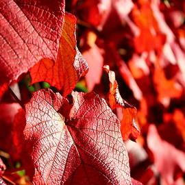Leathery Leaves  by Loretta S