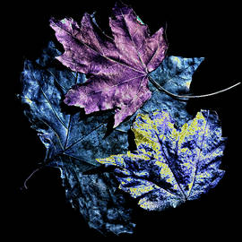 Leaves of a Different Color by Denise Harty