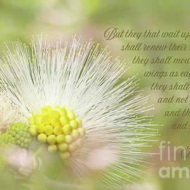 Lehua Ke'oke'o  Isaiah 40 verse 31 by Merissa Revestir