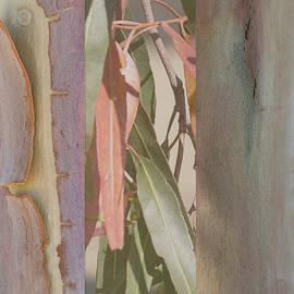 Lemon Gum Triptych by Linda Lees