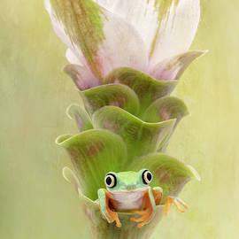 Lemur Frog on a Ginger Curcuma Flower by Linda D Lester